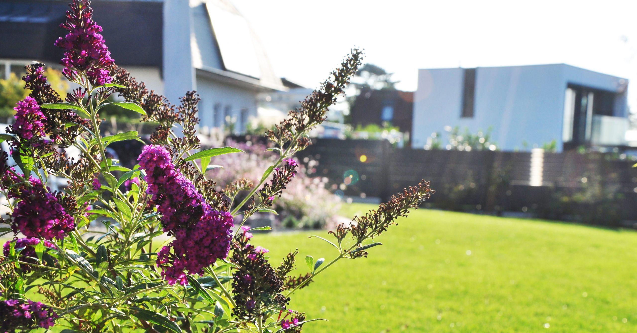 Blumen im Garten von gartencraft